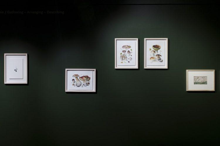 © Muzeum Sztuki i Techniki Japońskiej Manggha, fot. Kamil A. Krajewski